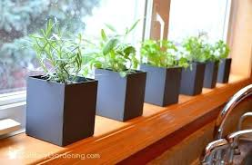 window herb garden guide to growing a windowsill herb garden kitchen window hanging herb garden