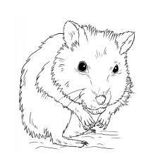 Hamster Clipart Outline Frames Illustrations Hd Images Photo