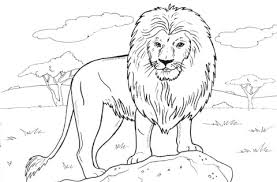 Small Picture African Lion coloring page Free Printable Coloring Pages