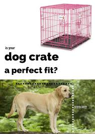 dog crates size chart best dog crates and playpens for labradors or large breeds