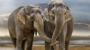 Elephant Desktop Backgrounds ...
