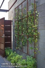 Small Picture Best 25 Vine trellis ideas only on Pinterest Plant trellis