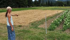 6 Simple Steps To Crop Rotation Hobby Farms