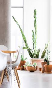 Interior Design: Indoor Succulent Decor Ideas - Garden Decor