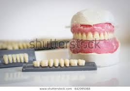 Teeth Setting Setting Teeth Part One Prosthetic Workshop Stock Photo Edit