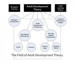 Theory Adult Development
