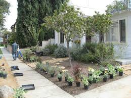 Small Picture frontyardduring welcome come in Pinterest Drought tolerant