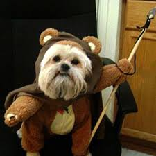 dog ewok costume jpg