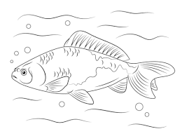 Small Picture Wakin Goldfish coloring page Free Printable Coloring Pages