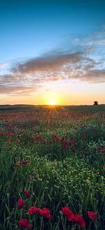 nl34-sunset-flower-nature-color-sky-green