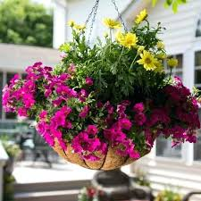 best outdoor hanging plants for full sun remarkable container with hanging plants outdoor full sun hanging