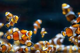 Aquarium Wallpaper Download Free Beautiful High Resolution