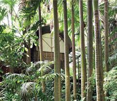 Small Picture Palm Garden House OZETECTURE