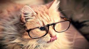 Cats, Cat wearing glasses, Hipster cat