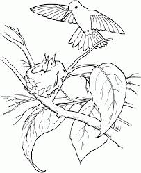 bird coloring page 282597 humming bird coloring pages