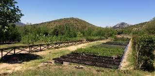 Sardegna Foreste - Attività - Gestione Foreste - Vivai conservativi