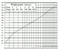Average Kitten Weight By Age Chart How To Keep A Maine Coon Growth Chart Maine Coon Expert