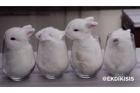 fluffy baby bunnies. Plain Fluffy Local Video Of Fluffy Baby Bunnies Put In Glasses Goes Viral Divides The  Internet On Fluffy Baby Bunnies The Straits Times