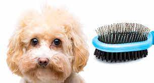 maltipoo grooming what you need to