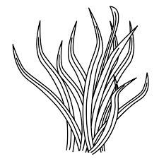 Sea plants drawing at getdrawings free for personal use sea sea plants drawing 9 sea plants