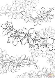 Small Picture Cherry Blossom Coloring Page New Pages creativemoveme