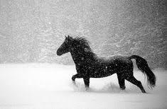 black horses in snow. Brilliant Horses Life Goal Ride A Black Horse In The Snow In Black Horses Snow D