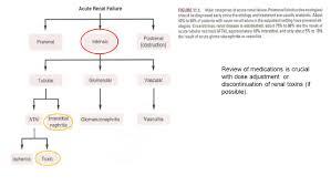 Acute Kidney Injury Acute Renal Failure Ppt Video Online