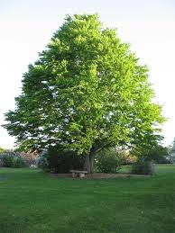 Small Picture 141 best Trees images on Pinterest Garden trees Landscaping