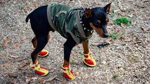 Qumy Dog Boots Size Chart The Best Dog Boots Chicago Tribune
