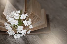 book white flower petal old spring close bride still life old book flowers used book pages