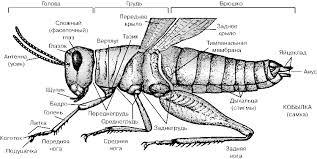 Видеоурок Насекомые Разнообразие насекомых Удивительные  В