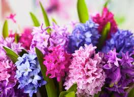 Image result for early spring flowers