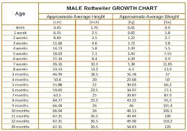 Normal Height And Weight Rottweiler Growth Chart Karma S Rottweilers Average Weight And