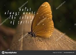 Beau Papillon Grande Lumière Avec Une Citation Citation Nature