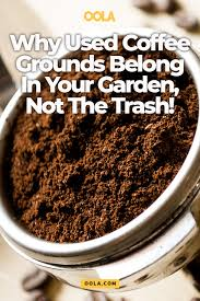 this is why used coffee grounds belong in your garden not the trash