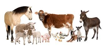Science Of Animals Under Fontanacountryinn Com