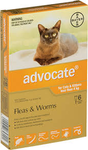imidacloprid for cats. Modren Cats Advocate Small Cats And Kittens With Imidacloprid For O