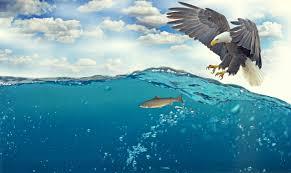 Image result for sea birds diving for prey