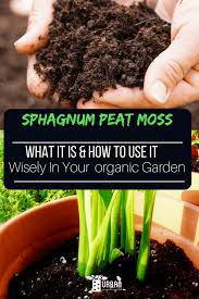sphagnum peat moss what it is how to use it wisely in your garden
