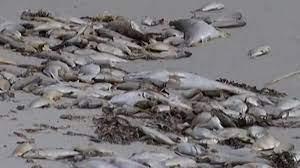 Gulf Coast beaches: reports ...