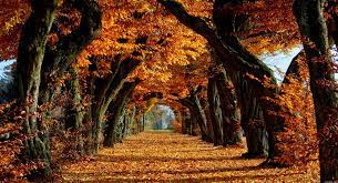 fall-backgrounds-autumn-trees-wallpaper ...