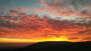 Risultati immagini per rossi tramonti tra alberi