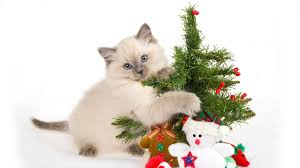 Download Wallpaper 1920x1080 Kitten, Spotted, Toys, Tree, New year ...