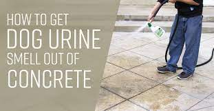 how to get urine smell out of concrete