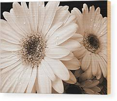 gerber daisy wood prints on gerber daisy canvas wall art with gerber daisy art fine art america