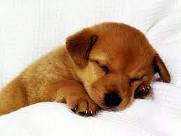 72+] Wallpaper Of Cute Puppies on ...