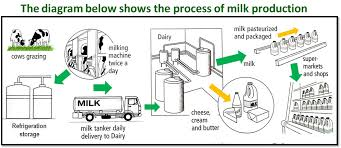 Ielts Writing Task 1 Flow Charts And Processes A Step By