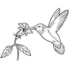 Realistic Hummingbird Coloring Page Bird Coloring Sheets For Dtp