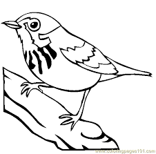 Small Picture Blue Jay Coloring Page Free Blue Jay Coloring Pages