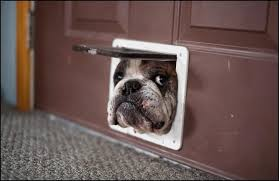 dog runs into glass door run into glass door gif ideas dog door gif